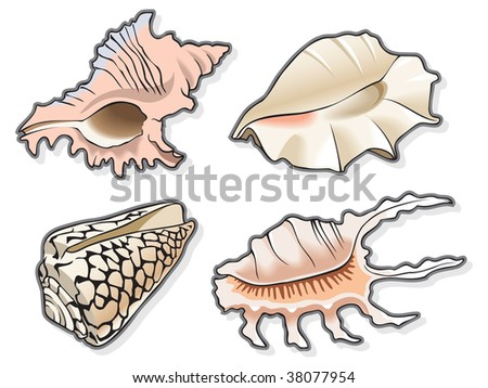 Set of four seashells, using blend and gradient fill, illustration - stock photo