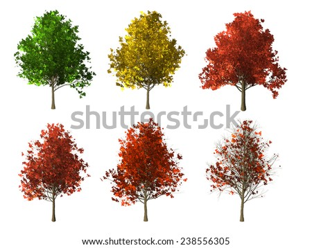 set of four seasons maple tree isolated on white background - stock photo