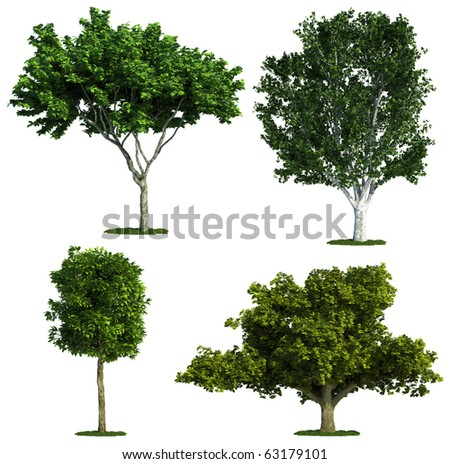 set of four trees isolated against pure white - stock photo