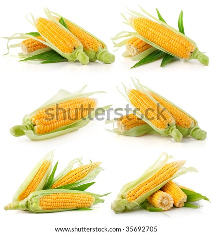 set of fresh corn vegetable with green leaves isolated on white background - stock photo