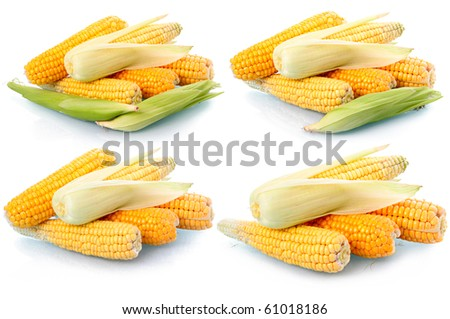 Set of fresh corn vegetables with green leaves isolated on white background - stock photo