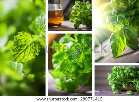 Set of fresh organic basil, melissa, herbal tea leaves on a wooden table - stock photo