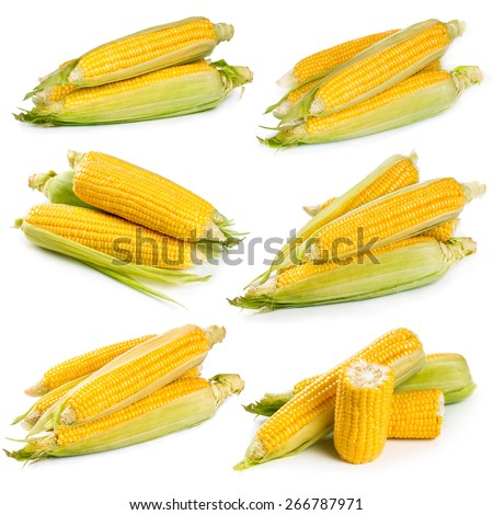 Set of fresh sweet corn isolated on white background - stock photo