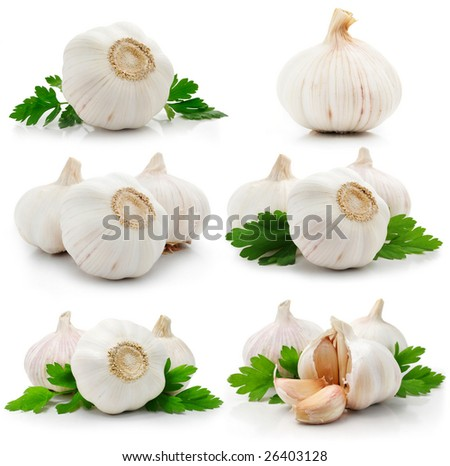set of garlic fruits with green parsley leaves isolated on white background - stock photo