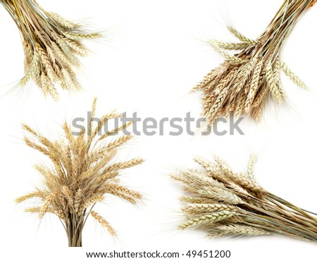 Set of  golden wheat ears  isolated on white background - stock photo
