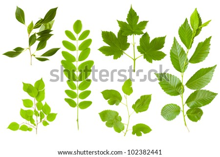 set of green branches - stock photo