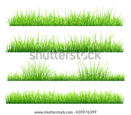 Set of green grass, isolated on white background. Vector illustration - stock photo