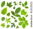 Set of green leaf isolated - stock photo