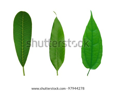 set of green leaf isolated on a white - stock photo