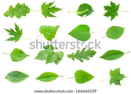 Set of Green Leaves isolated on white background