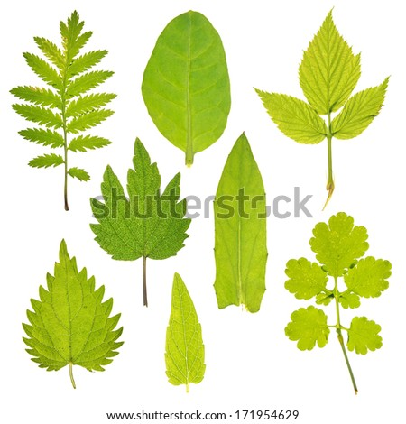 Set of green leaves of different medicinal plants - stock photo