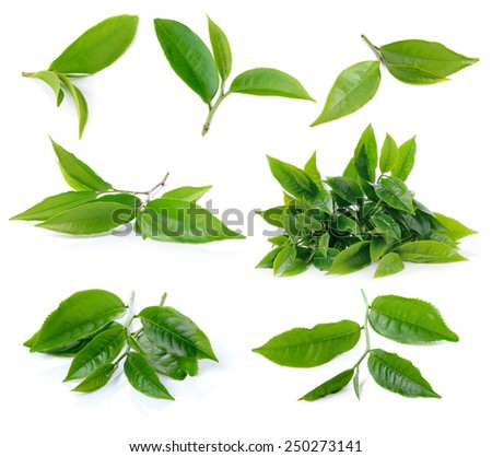 set of green tea leaf isolated on white background - stock photo