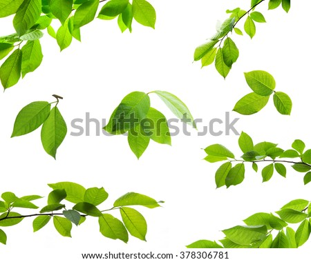 Set of green tree leaves and branches with raindrops isolated on white background - stock photo