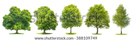Set of green trees oak, maple, birch, chestnut. Nature objects isolated on white background - stock photo