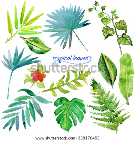 Set of green tropical watercolor leaves and plants. - stock photo