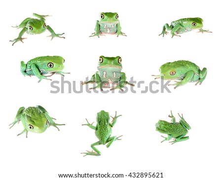 Set of green waxy monkey leaf frog Phyllomedusa sauvagii isolated on white - stock photo