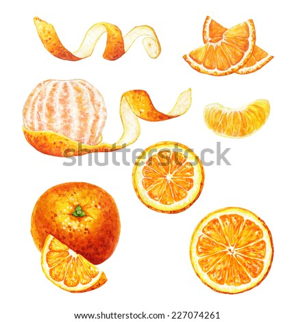 Set of hand drawn watercolor mandarins and oranges: sliced and peeled. - stock photo