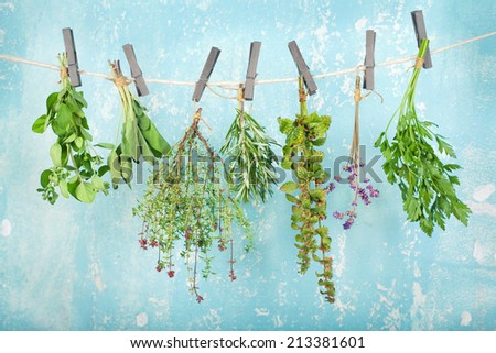 Set of herbs (oregano, parsley, thyme, rosemary, sage, lavender) hanging and drying on a vintage blue wall - stock photo