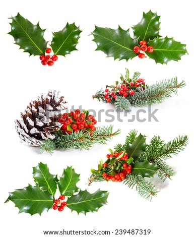Set of   Holly leaves and berries with a pine branch on a white background  - stock photo