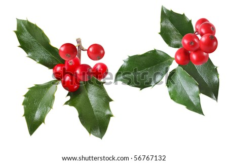 Set of  holly sprigs isolated on white background - stock photo