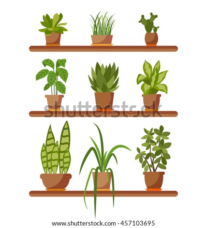 Set of house plant isolated.  Collection of flat home plant pot. Colorful house plants in pot for your design. Home plants icons set - stock photo