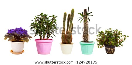 Set of houseplant in  pots. Isolated on white background