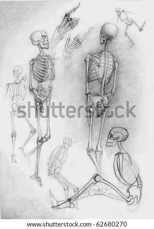 Set of human skeletons in different poses,pictured by photographer by a pencil