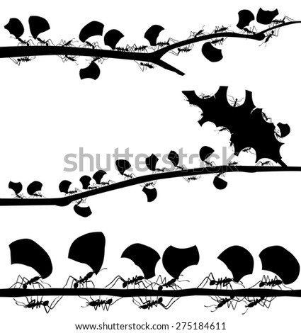Set of illustrated silhouettes of leaf cutter ants on branches - stock photo