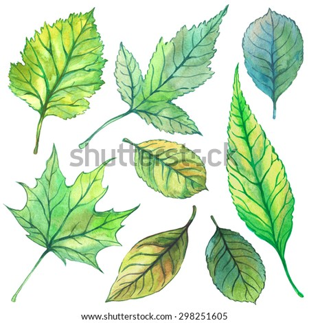 Set of illustrations with leaves. Summer. Watercolor.