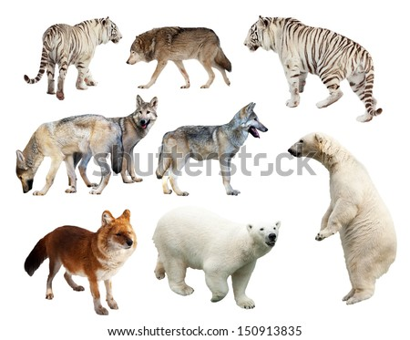 Set of images of predators. Isolated over white background  - stock photo