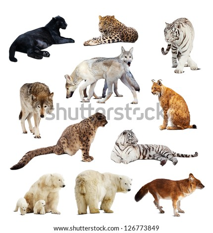 Set of images of predators. Isolated over white background with shade - stock photo