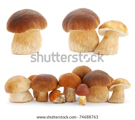 Set of images with mushrooms on white background - stock photo