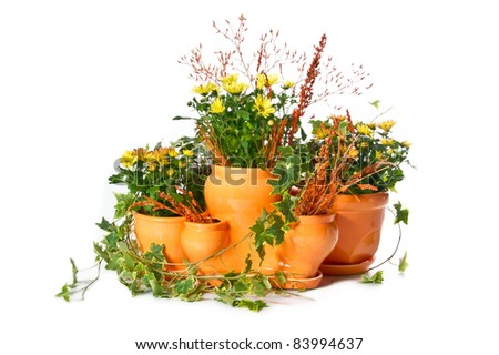 Set of indoor plants in flowerpots on white background - stock photo