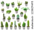 Set of indoor plants in pots - cacti and other succulents - stock photo