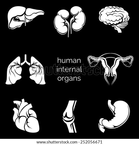 Set of internal human organs white silhouettes in the black background - stock photo