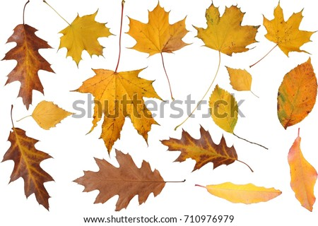 set of isolated autumnal leaves