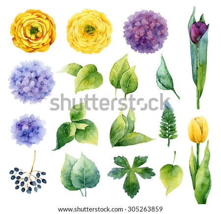 Set of isolated elements of flowers and leaves. Watercolor illustration - stock photo