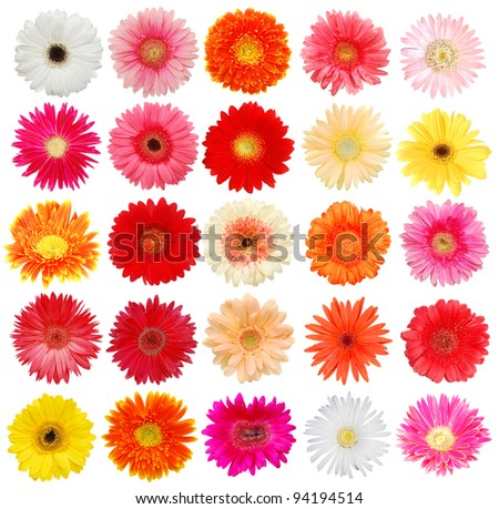 Set of isolating Gerber flowers - stock photo