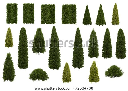 Set of juniper and thuja trees isolated on white background - stock photo