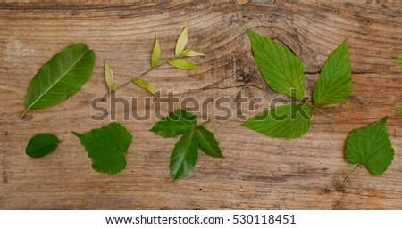 Set of leaves and old wooden texture