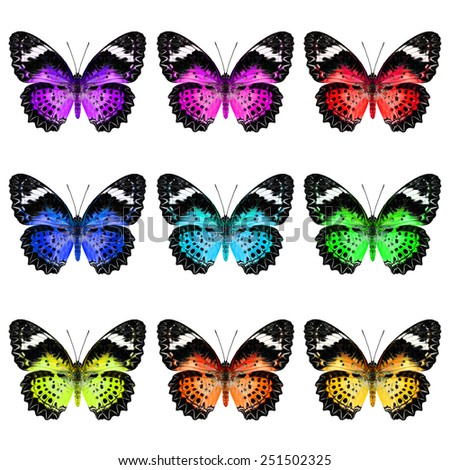 Set of Leopard Lacewing Butterfly in colorful and fancy color profile - stock photo