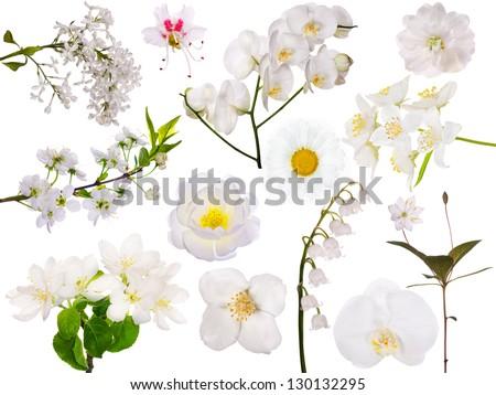set of light flowers isolated on white background - stock photo