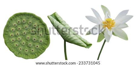 Set of lotus flower isolated over white background - stock photo