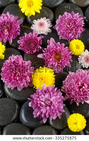 Set of many Gerbera,flower on pebbles  - stock photo