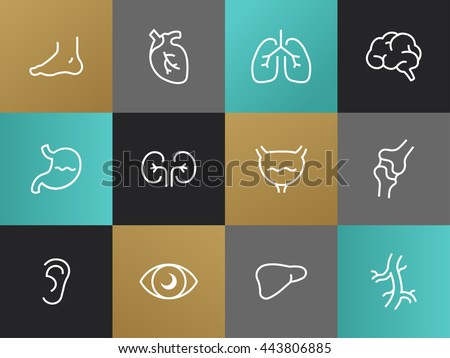 Set of modern Body parts plain simple thin line design icons and pictograms. Eyes, ear, limbs, heart, lungs, brain, bladder, liver, stomach, kidneys, intestinal tract  pancreas, bones - stock photo