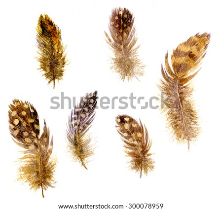 set of mottled brown plumes, watercolor drawing feathers at white background, hand drawn artistic painting illustration - stock photo