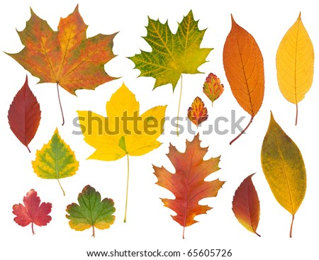 Set of multi-colored autumn leaves - stock photo