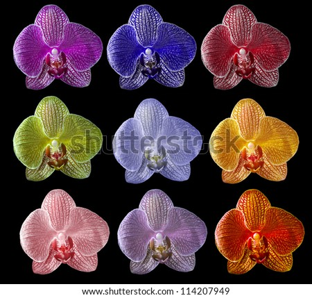 set of nine colors orchid flowers isolated on black background