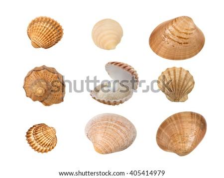Set of nine seashells isolated on white - stock photo