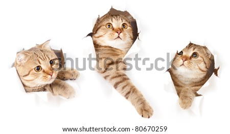 set of one cat in paper side torn hole isolated - stock photo